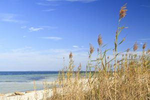 Sea Oats and Blue Sky