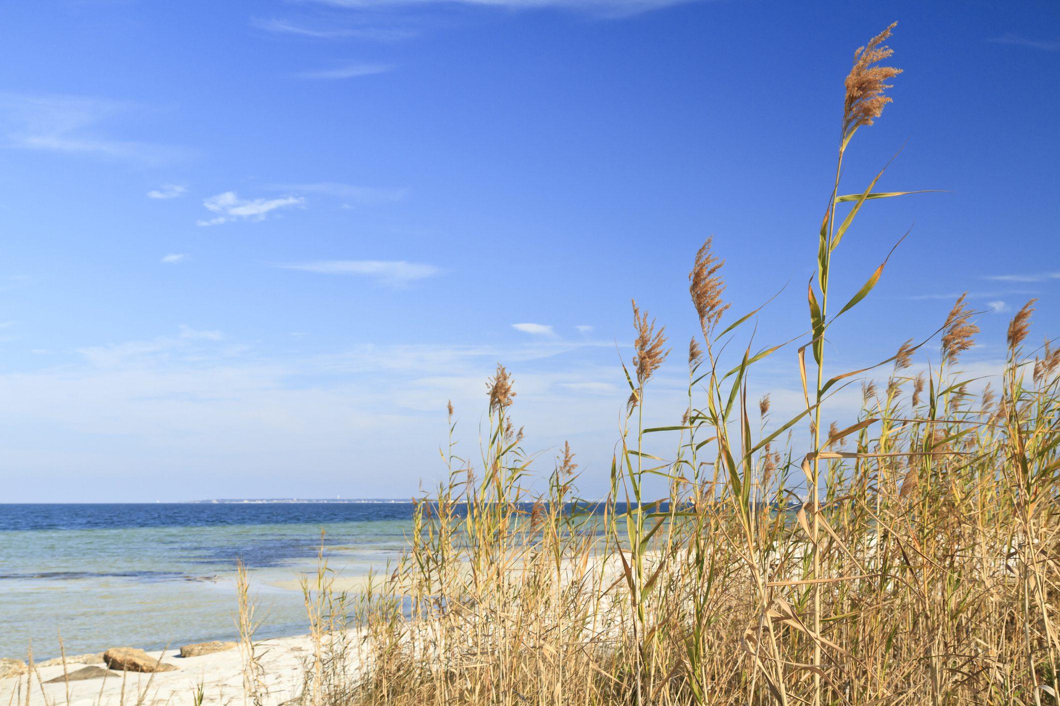 Sea Oats and Blue Sky